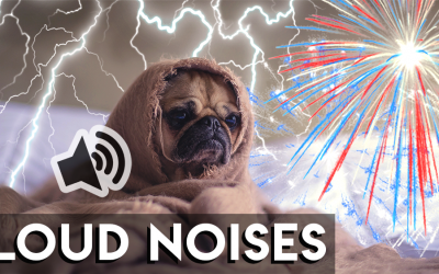 Thunderstorms & Sound Aversions