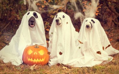Keep the Paws Off These Halloween Treats!