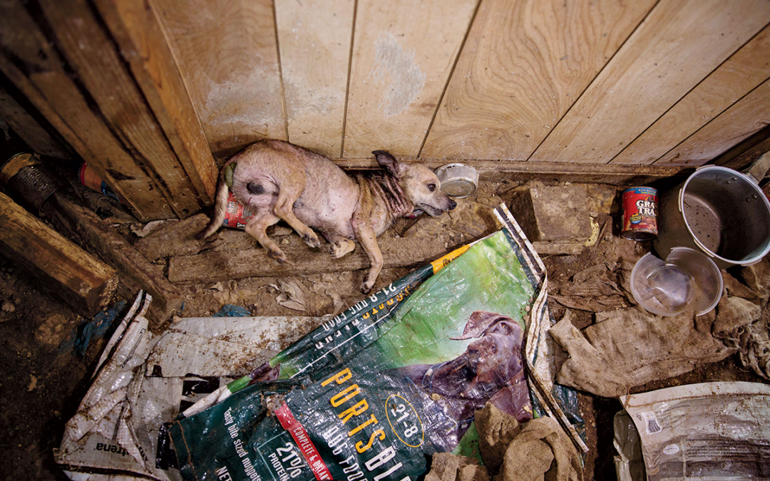 Puppy Mills: Why They Exist & How to Stop Them